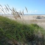 Strand Dünen Amrum